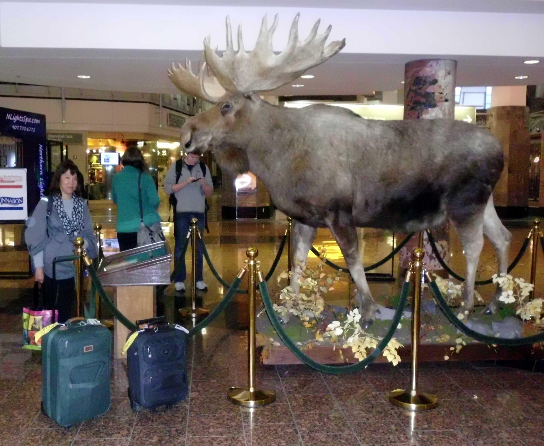 AirportMoose