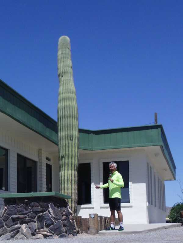 popsicle by the saguaro