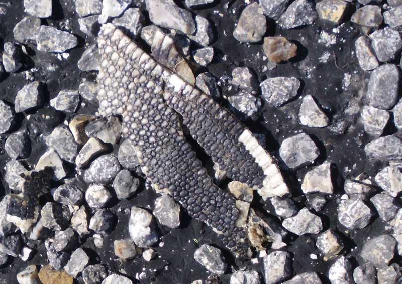 mystery animal shell