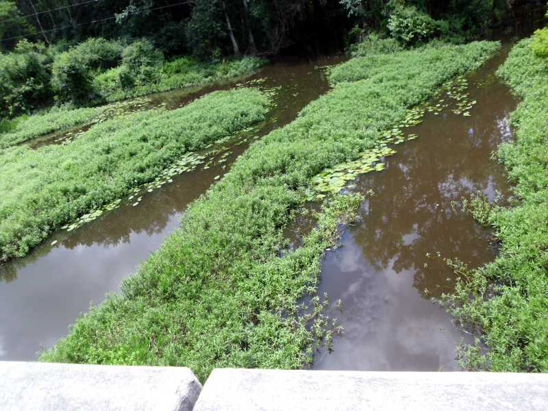 from bridge at Alligator Creek