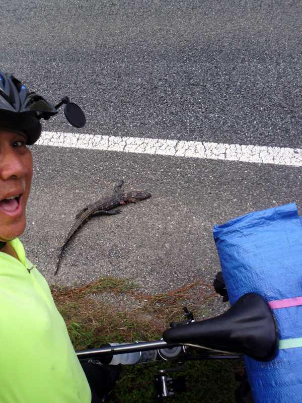 alligator outside Tallahassee